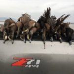 Wigeon smackdown